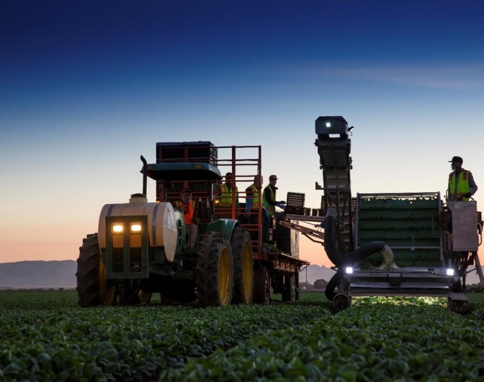 Salanova Teenleaf machine harvesting